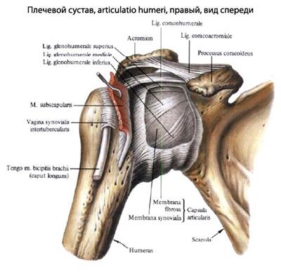 Перелом плеча и плечевой кости и его лечение